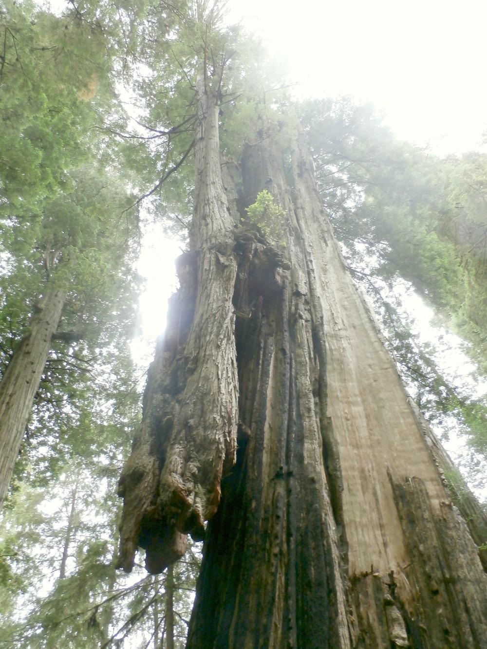 ...podivuhodné zrastené stromy…