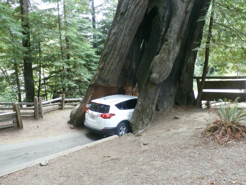 ...a stromy, cez ktoré vedú cesty.