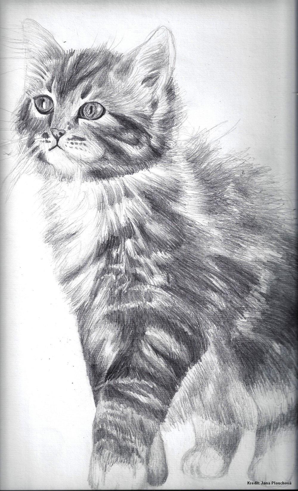 Felis domestica