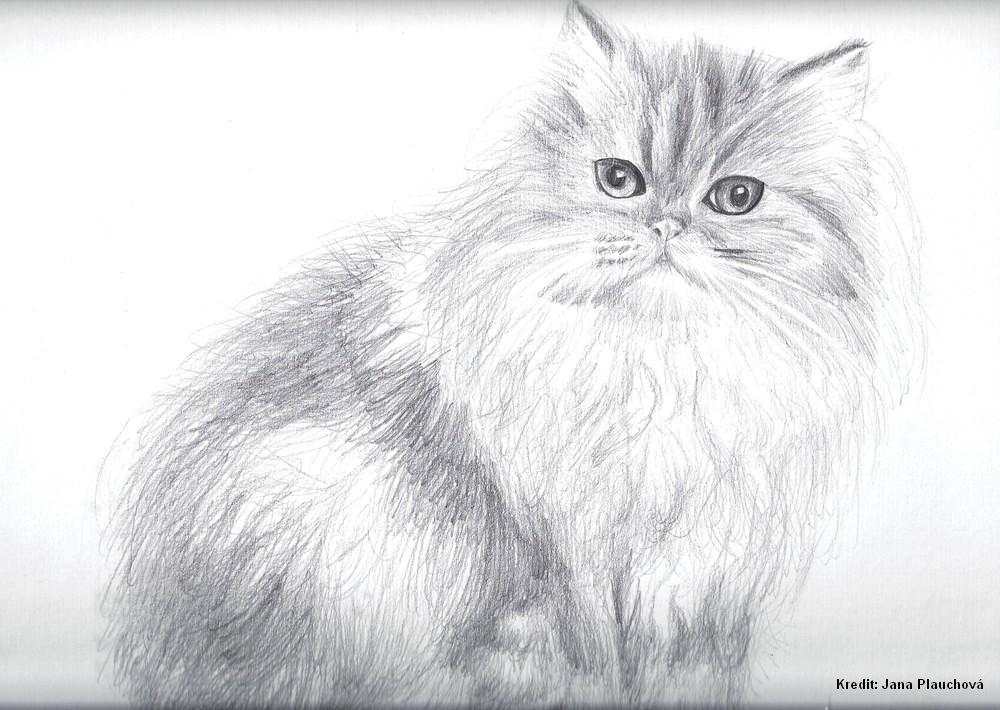 Felis domestica2
