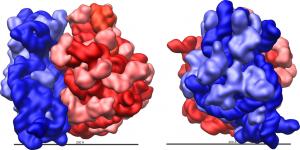Veľká (červená) a malá (modrá) podjednotka ribozómu baktérie Escherichia coli