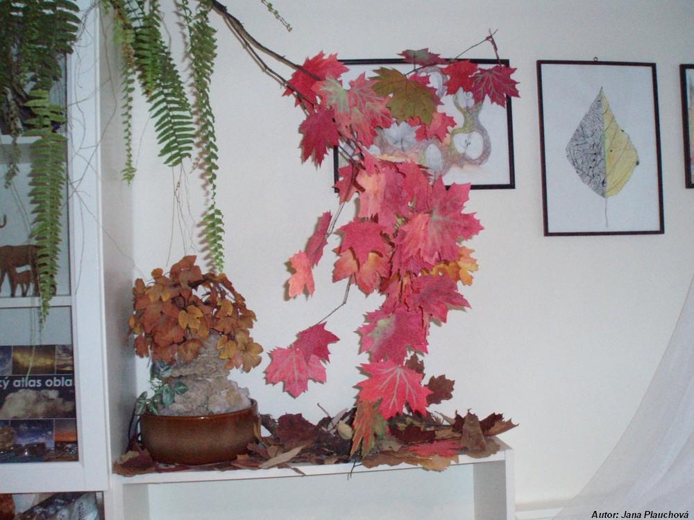 Červený javor v roku 2009